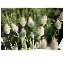 Wild Flora II 8995 Poster