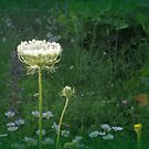 Queen Anne's Lace at Dusk by goddarb