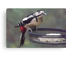 Great Spotted Woodpecker Eating Peanut Cake Canvas Print