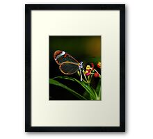 In a different light........ Framed Print