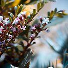 Coral by Sherstin Schwartz