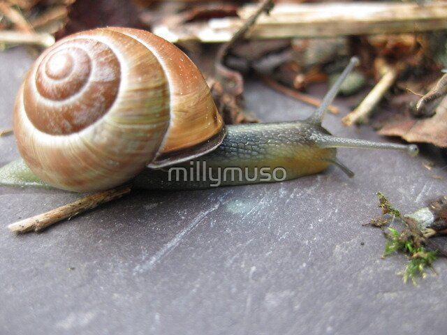 creeping snail by millymuso