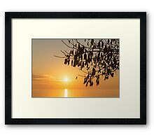 Brilliantly Sunlit Golden Autumn Jewels Framed Print