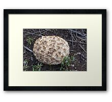Fungi Ball Framed Print