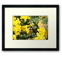 Seeking the Sweetest Nectar Framed Print