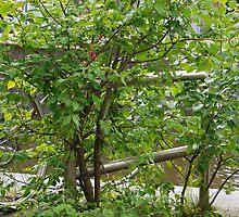 The Tree won! by Marjolein Katsma