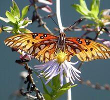 Nectaring in the Sunlight by Judy Wanamaker