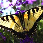 With Open Wings by Tim Scullion