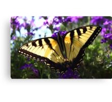 With Open Wings Canvas Print