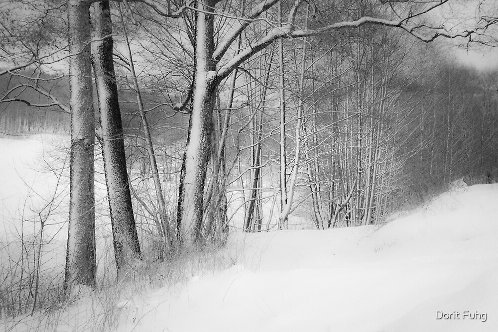 gateway to the winter forest by Dorit Fuhg