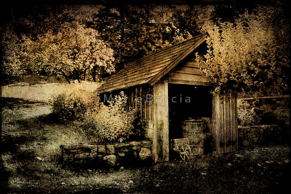 The Old Shed at Sunnyside by M a r i e B a r c i a