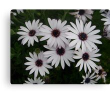 Six Pack of Daisies Canvas Print