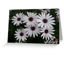 Six Pack of Daisies Greeting Card