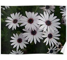 Six Pack of Daisies Poster