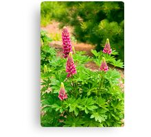 Pretty in Pink in the Country Canvas Print