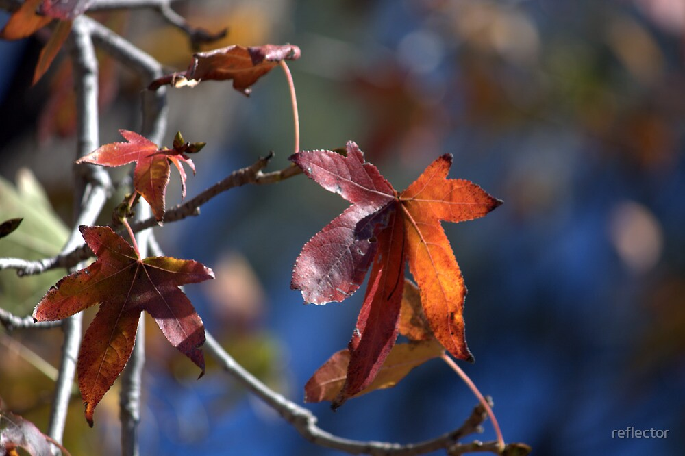 Colour And Light by reflector
