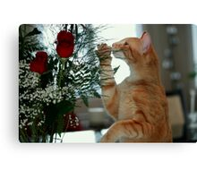 Smell The Rose Canvas Print