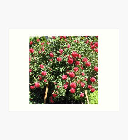An Easel of Divine Roses Art Print