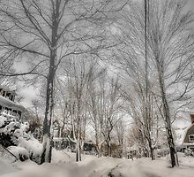 After Blizzard Nemo, Brookline, MA by LudaNayvelt
