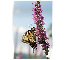 Yellow Swallowtail Poster