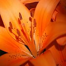Vibrant Lily by Ruth Lambert