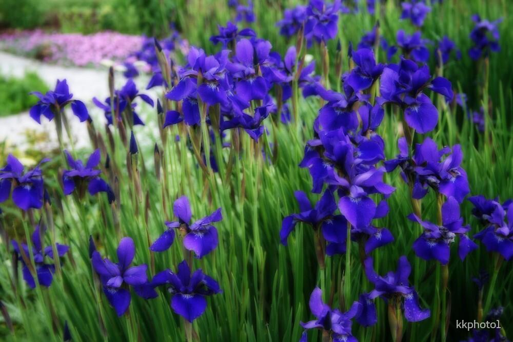 Iris In The Field by kkphoto1