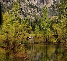 Yosemite Reflections by Barbara  Brown