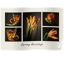 Spring Greetings Card Poster