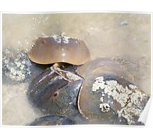 The Horseshoe Crab Spawn Poster