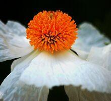 Flower III by loiteke