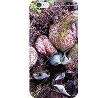 Eastern Skunk Cabbage (symplocarpus foetidus) iPhone Case/Skin