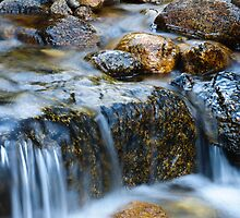 Creek  by John Anderson