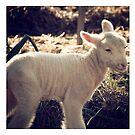 Sookie Lamb by jemimalovesbigted