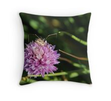 spider on chive flower Throw Pillow