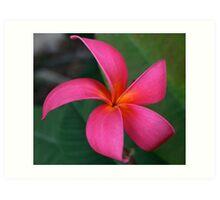Red Plumeria - Frangipani Art Print