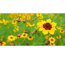 Wildflower Gumbo Photographic Print