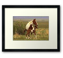 Star Of The Show Framed Print