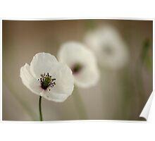 White Poppy 3 Poster