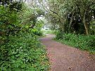 Winding Woodland Walk by DonDavisUK