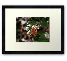 Pollen-Nation Framed Print