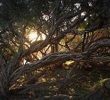 Reaching Tree by Jay  Little
