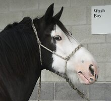 """Black Clydesdale - """"Sam"""" by louisegreen"""