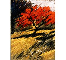 roter Apfel Photographic Print
