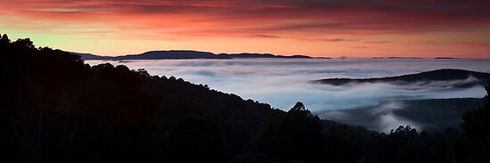 Foggy Dawn by Alistair Wilson