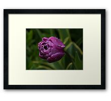 Stripes, Raindrops and Petals Framed Print