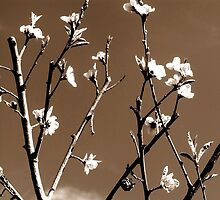 Peach blossoms in Spring by Elizabeth Kendall