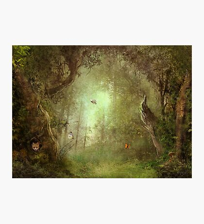 Butterfly Grove Photographic Print