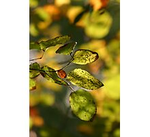 Amber Leaves Photographic Print