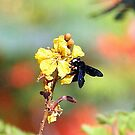 The humble Bee. by debjyotinayak