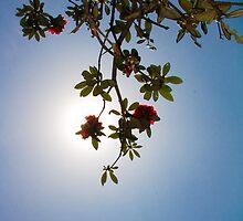 hiding the sun by Dinni H